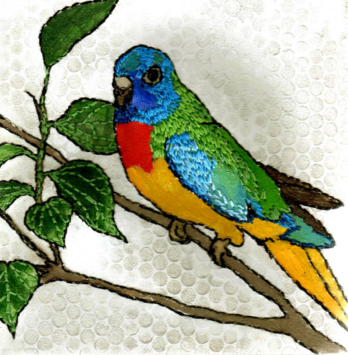 Splendid Parakeets For Sale http://www.yukisnow.co.uk/?page_id=513